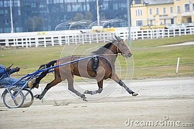 Harness horse race