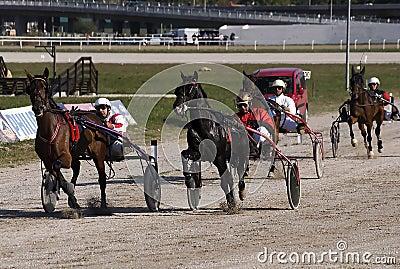 Harness racing-2 Editorial Photo
