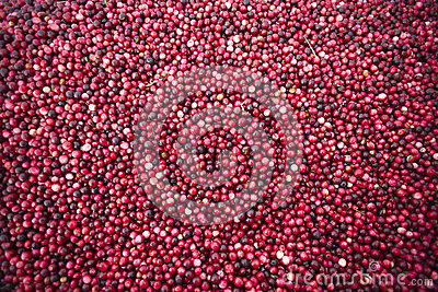 Cranberry Harvest Fruit Food Floats Water Surface