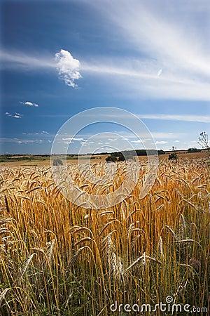 Free Harvest Stock Photo - 2871510