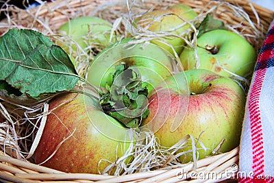 Harvest of aplles