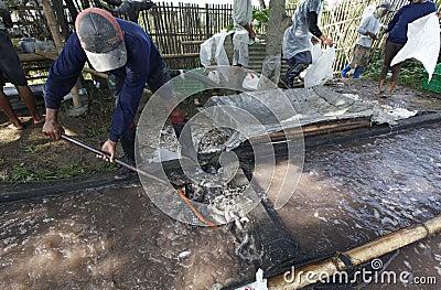 Harvest catfish Editorial Photo