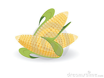 Harvest of corn