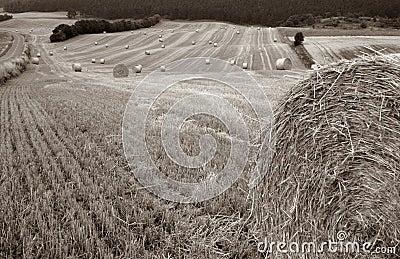 Harvest field bale of straw