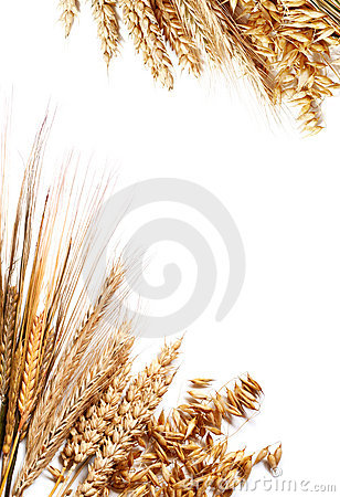 Free Harvest Frame Royalty Free Stock Image - 3316406
