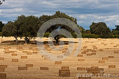 Harvest Of Hay Stock Image - Image: 9792791