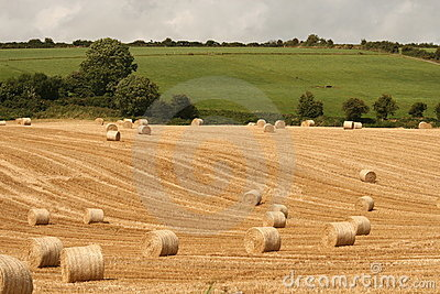 Harvest in ireland, cork county