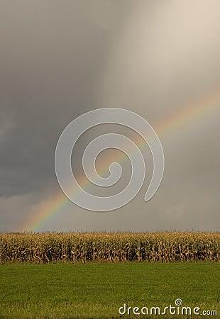 Harvest Promise