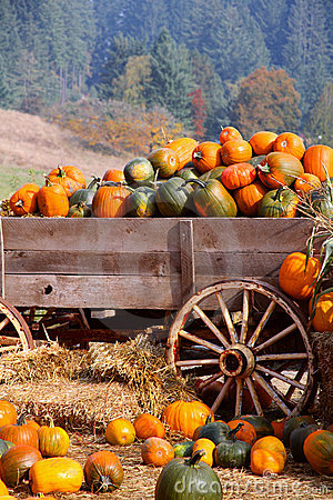 Free Harvest Pumpkin Wagon Royalty Free Stock Photography - 3386347