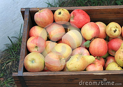 Harvest of ripe apples and pears