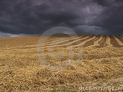 Harvest before the storm
