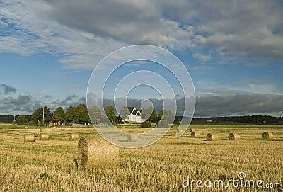 Harvest in Sweden