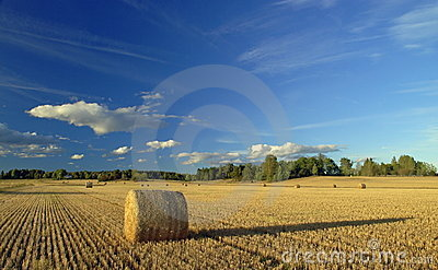 Harvest in Sweden