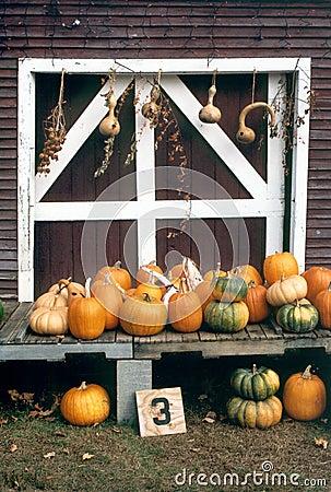 Harvest Time, New England Farm