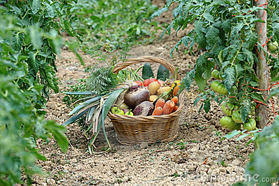 Harvest vegetables two