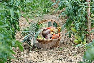 Harvest vegetables two