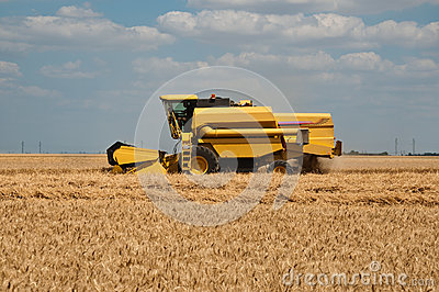 Harvest in wheat field