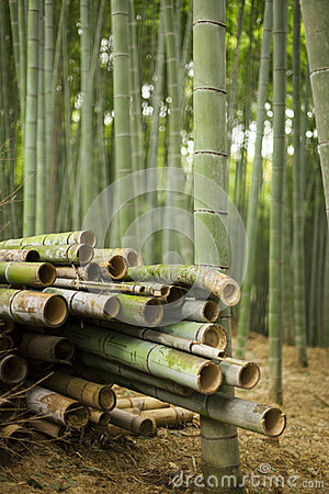 Harvested Bamboo in Forest