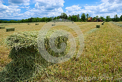 Harvested Hay Bales
