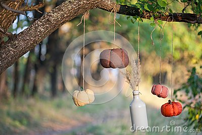 Harvested pumpkins decorate