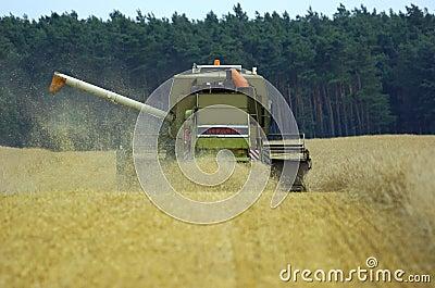 harvester corn earning time