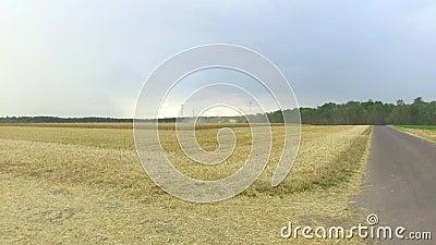 Harvester. Combine harvesting wheat in summer stock video
