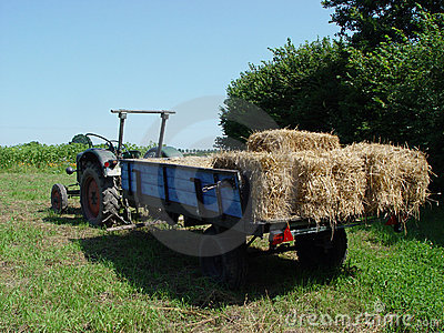 harvesting 1
