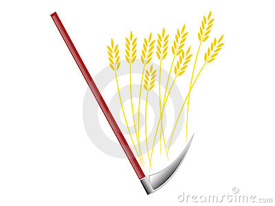 Harvesting bread