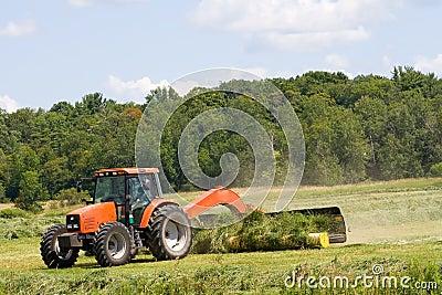 Harvesting hay.