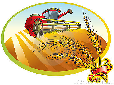 Harvesting machine and wheat ears