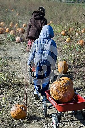 Haulin Pumpkins