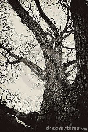 Haunted old tree