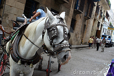 Havana Horse