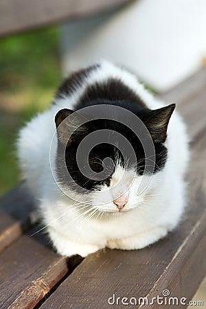 Having a rest cat