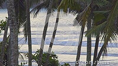 Havskusten vid soluppgång stock video