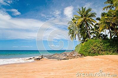 Hawaii palm trees tropical beach