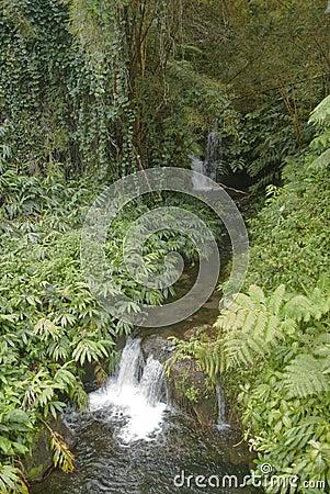 Free Hawaii Scenery: Small Cascade Waterfalls Near Akaka Falls Stock Image - 39997401
