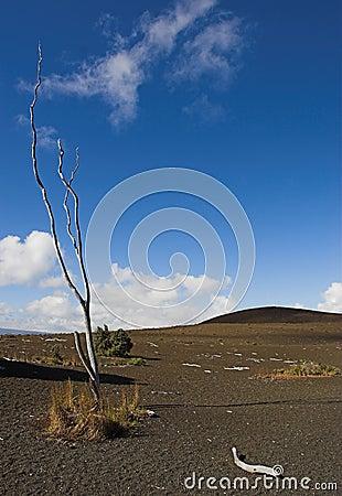 Hawaii Volcanoes National Park - Devastation Trail