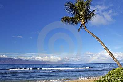 Hawaiian Beach Scenic