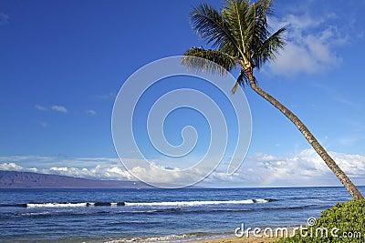Hawaiian Beach Scenic