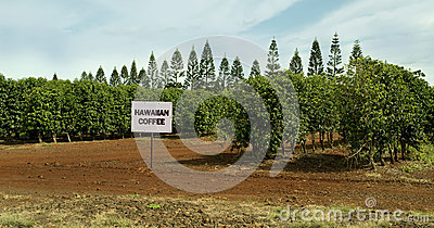 Hawaiian Coffee Farm.