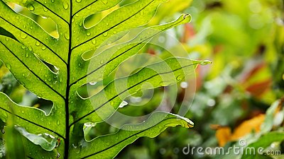Hawaiian fern