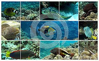 Hawaiian Marine Life