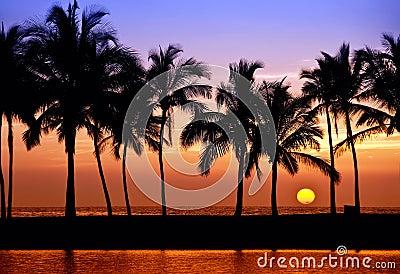 Hawaiian palm tree sunset
