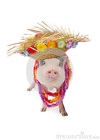 Free Hawaiian Pig Wearing Hat And Lei Stock Photo - 48758800