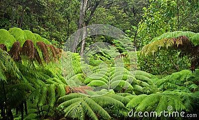 Hawaiian Rainforest