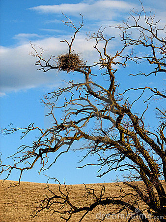 Free Hawk Nest Stock Photography - 630932