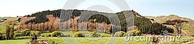 Hawkes Bay Landscape Panorama