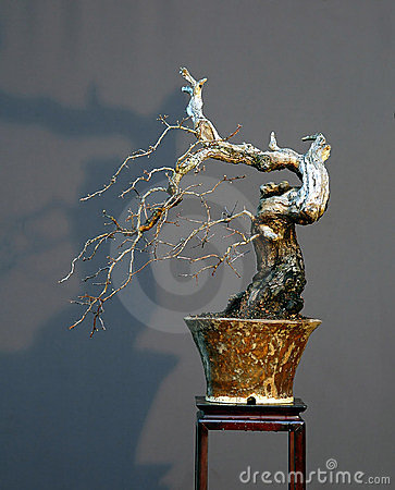 Free Hawthorn Cascade Bonsai In Winter Royalty Free Stock Image - 1684566