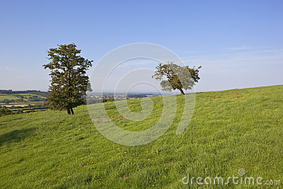 Hawthorn trees and grass